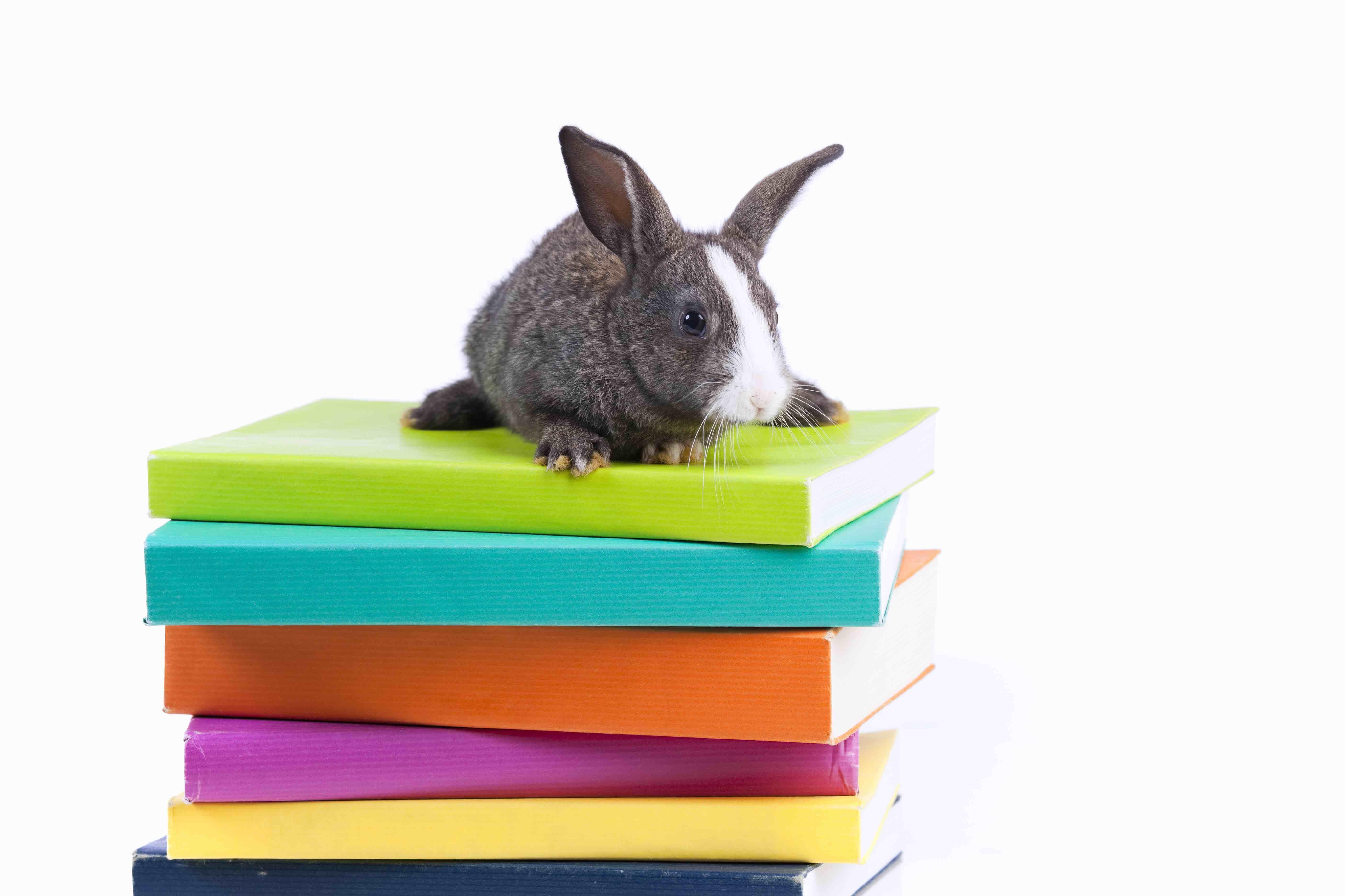 Books Rabbit