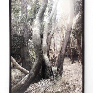 Τάσσος Βρεττός, The Woods, 2007, τύπωμα σε χαρτί fine art, 160x120 cm.