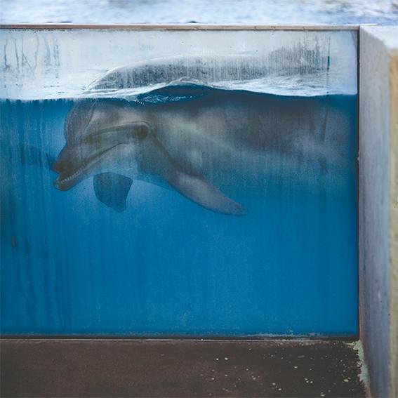 Γιάννης Καρπούζης φωτογραφία δελφίνι Entraped Dolphin