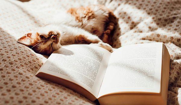 Γάτος Μαουρίτσιο Παιδικά Βιβλία