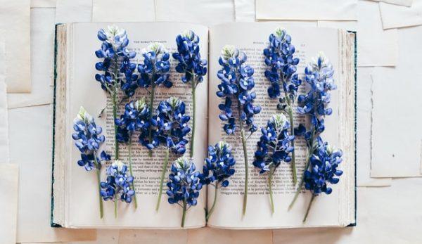 Καλά Βιβλία για Καλό Φθινόπωρο